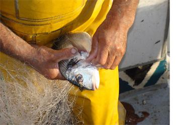 La chasse et la pêche tv en ligne strim